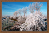 Zeeland Winter 06 by corngrowth, Photography->Landscape gallery
