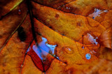 Oasis by SatCom, Photography->Macro gallery