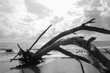 Toppled by aboogie, Photography->Shorelines gallery