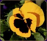 Saturday Sunshine by trixxie17, photography->flowers gallery