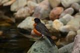 Wet Bird or Splish Splash I Was  Taking a Bath by tigger3, Photography->Birds gallery
