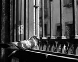 Bird by daveisgnome, photography->birds gallery