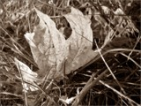autumn in sepia by Marzena, contests->b/w challenge gallery