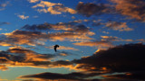 High Flyer by braces, photography->birds gallery
