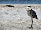 Island Birds III by allisontaylor, Photography->Birds gallery