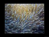 Under The Sea VI by Hottrockin, Photography->Underwater gallery