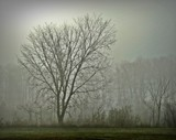 Morning Fog by picardroe, photography->landscape gallery