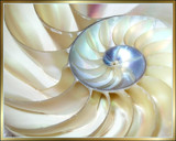 Patterns of the Sea in the Nautilus by verenabloo, photography->still life gallery