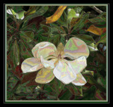 Magnolia Splendor by verenabloo, Photography->Manipulation gallery