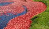 cranberry parfait by solita17, Photography->Shorelines gallery