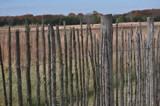 stick fence by fivepatch, photography->landscape gallery