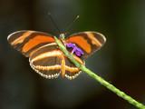 Butterfly by jeffpratt, Photography->Butterflies gallery