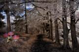 For Sandi by biffobear, photography->manipulation gallery