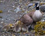 AWWWWWWWWW! by jeenie11, photography->birds gallery