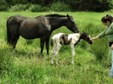 Newborn Wonderment by verenabloo, Photography->Animals gallery