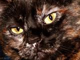 Marie Miaou by LeBlaze, photography->pets gallery