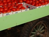 Tomato Cart by jeffpratt, Photography->Food/Drink gallery