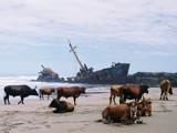 A shipwreck in the Transkei, South Africa by grizzlyjunk, Contests->Nature taking over gallery
