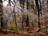Sturm Bruch Lösen by jojomercury, Photography->Landscape gallery