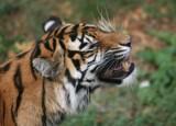 grrrrrrrrrrrrrrr by JQ, Photography->Animals gallery