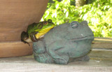 Froggy Friends by mrobins3, contests->curves gallery