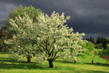 Thunder in the Apple Orchard by Silvanus, photography->landscape gallery