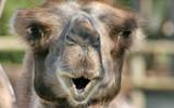 Ooooooooohhhh by boremachine, Photography->Animals gallery