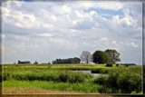 A Zeeland Polder by corngrowth, photography->landscape gallery