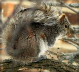 Aww Nuts! by trixxie17, photography->animals gallery