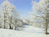 Winter 7 by Clayd, Photography->Landscape gallery