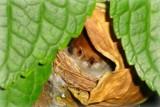 Image: Little birdie in my garden