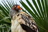 Condor by nigelmoore, Photography->Birds gallery