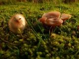fungi. by Lin_O, photography->mushrooms gallery