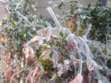 Winter's Icy Fingers by angelledaemon, Photography->Gardens gallery