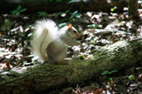 White Squirrel! by Pistos, photography->animals gallery