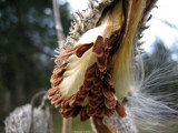 Secret Splendor by Hottrockin, Photography->Flowers gallery