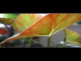 leaf by proxima_centauri, photography->macro gallery