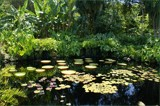 Fairchild Tropical Botanic Garden - Lilypads by diaz3508, photography->landscape gallery