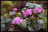 Spring Has Begun! by verenabloo, Photography->Flowers gallery