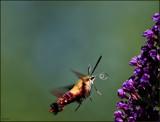 A Calendar Garden Capture by tigger3, photography->action or motion gallery