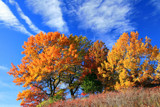 Icons of Autumn by Silvanus, photography->landscape gallery