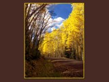 Aspens on the Road to Platoro Colorado by fotobob, Photography->Landscape gallery