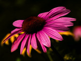 Deep in color by tigger3, Photography->Flowers gallery