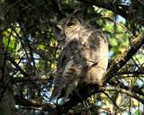 Owls back by J_E_F, Photography->Birds gallery