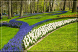 Keukenhof 07 by corngrowth, photography->gardens gallery