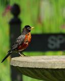 Bird Bath by tigger3, photography->birds gallery