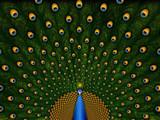 Peacock by vladstudio, Illustrations->Digital gallery