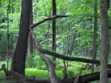 Image: Tree's Gone Wild
