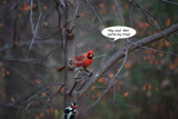 Sunday Funnies by Jimbobedsel, photography->birds gallery