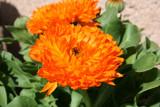 Orange Flower by soosool, Photography->Fireworks gallery